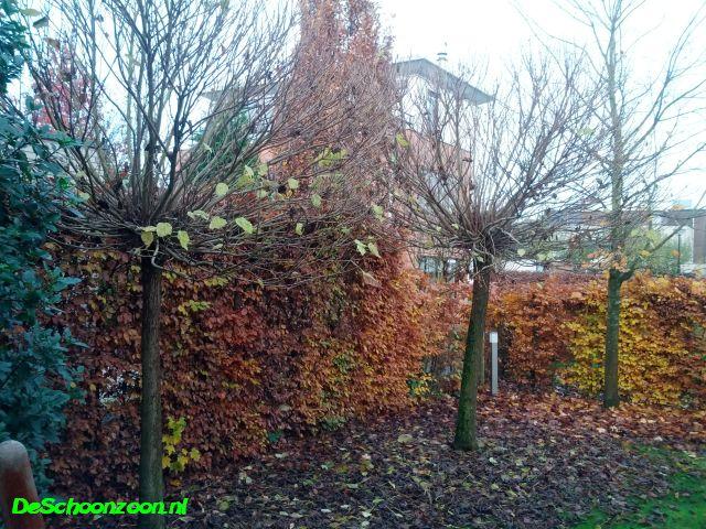 Winterklaar Maken Tuin : Tuin winterklaar maken hoe doe je dat de beste tips roomed